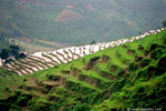 Terraces of Nuwakot