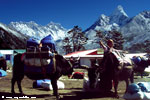 A Sherpa woman at Thengboche and the Mt. Everest (8848m)